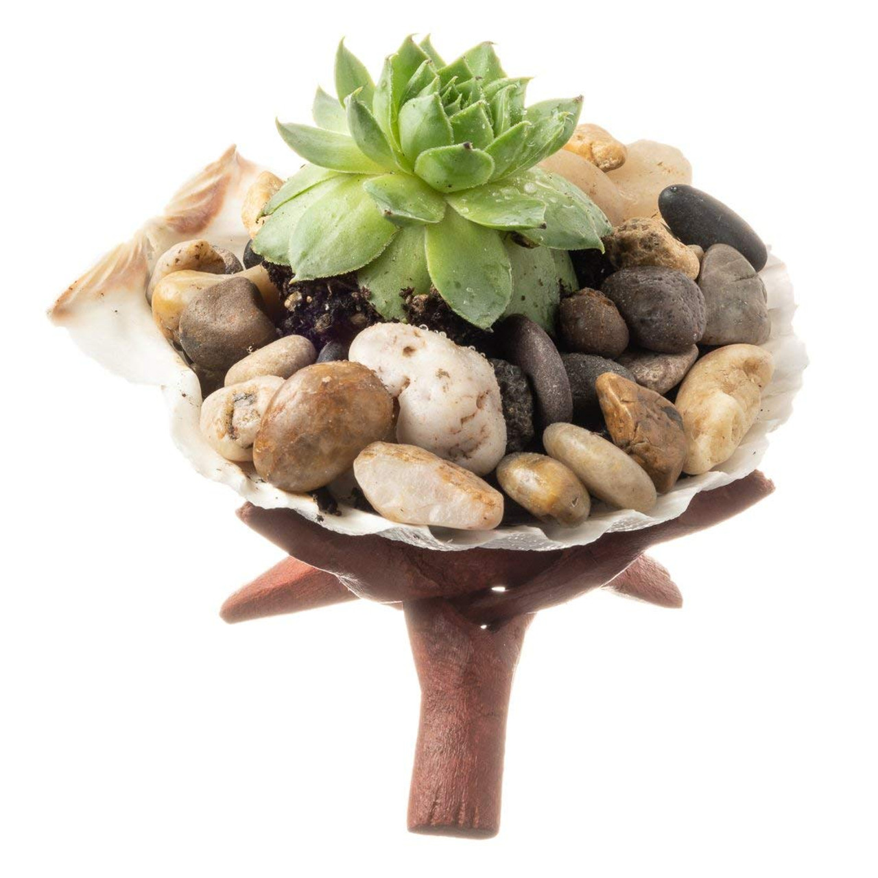 Diy Terrarium With Succulents Why Buy When You Can Diy Succulent