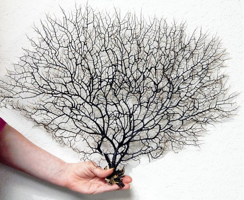 Bulk Jewelry Wholesale Black Sea Fan Natural 14 16 Aquarium Decor Beach Home Decor