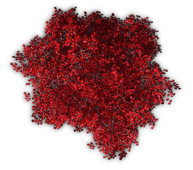 Flower Plant Top View Png Trees Tree Blossoms Nature Red Autumn Topview
