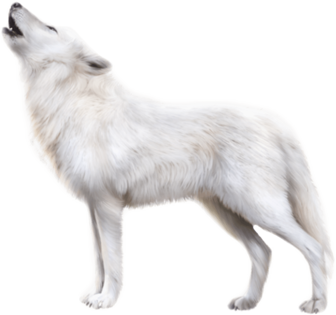 Clipart Images Video Wolf Sticker By Cherigoodman59