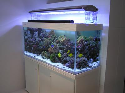 | Pond Maintenance| Aquarium Services| Tank Maintenance and Service