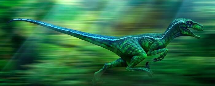 Black And White Animal Wallpaper Velociraptor La Velocidad Representada Por Un Animal