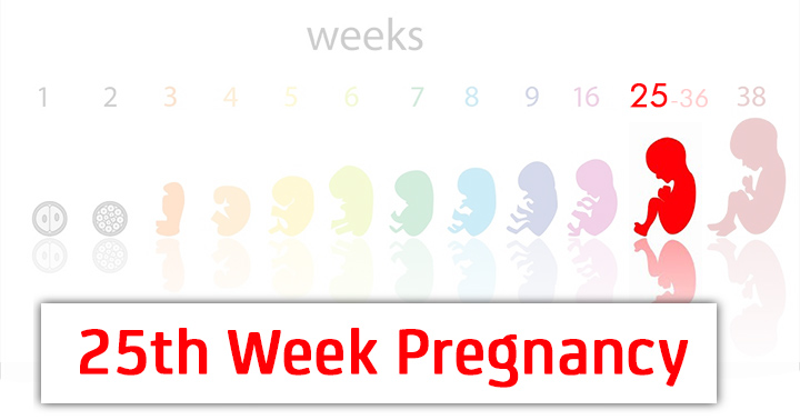 25th Week Pregnancy Symptoms, Baby Development And Body Changes