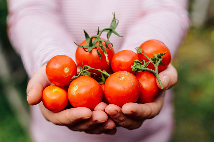 Can You Eat Tomatoes During pregnancy?
