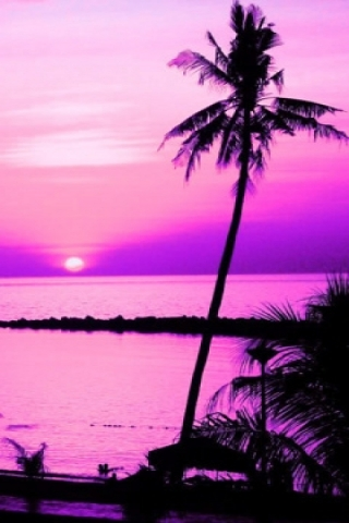 Purple palmtree wallpaper