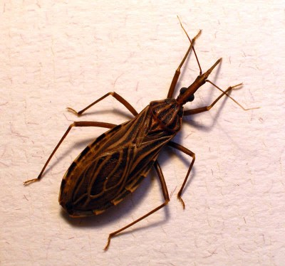 Top 10 Deadliest Insects In The World - The Mysterious World