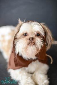 Easy Ewok No Sew Dog Costume Tutorial | Tikkido.com