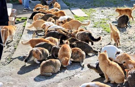 cat-island-japan-tweet-food-donation-aoshima-5