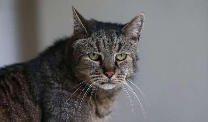 31-year-old-cat-nutmeg-2-2