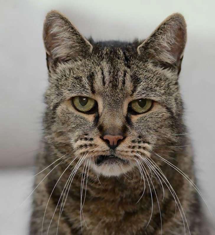 31-year-old-cat-nutmeg-7-2