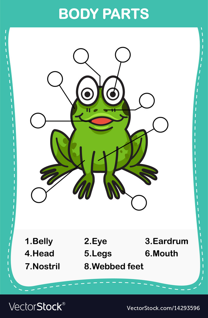Frog vocabulary part of body Royalty Free Vector Image - frog body