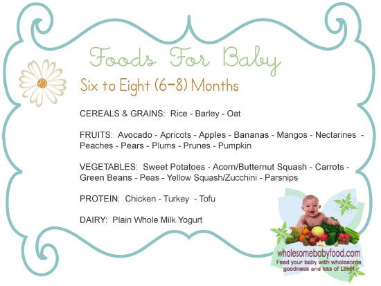 Introducing Solids to Your 6 month to 8 month old Baby - Learn about