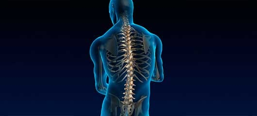 Back  Neck Pain Brain and Spine