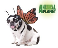 Animal Planet Butterfly Pet Costume