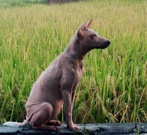 rescue_dogs_10