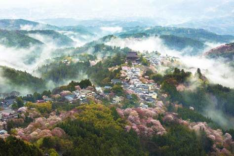 spring-japan-cherry-blossoms-national-geographics-241