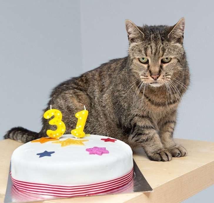 31-year-old-cat-nutmeg-11-2
