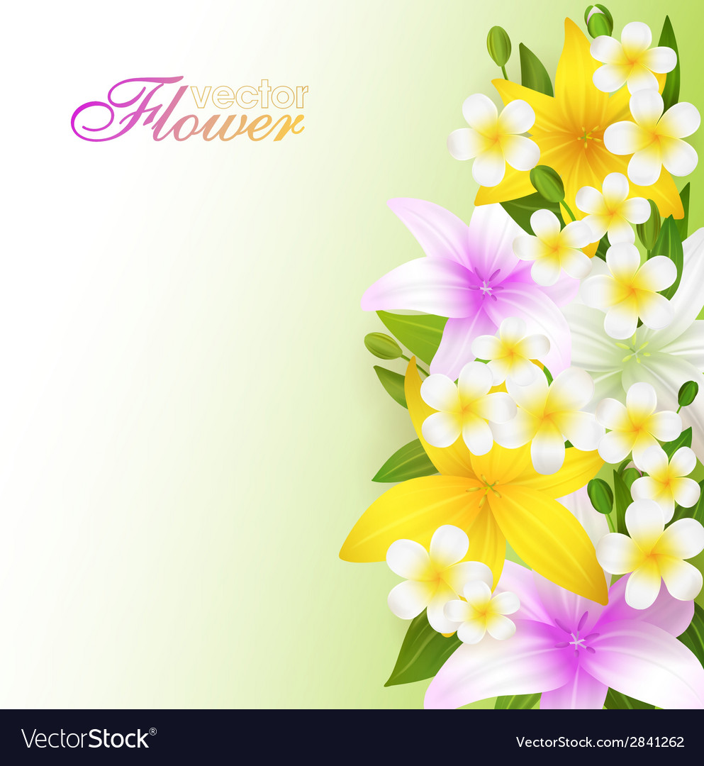 Beautiful Pictures Of Flowers Beautiful Flowers Background