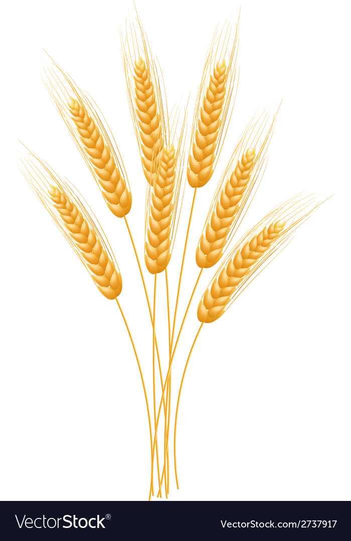 Wheat Template  Golden Ear Of The Wheat Presentation