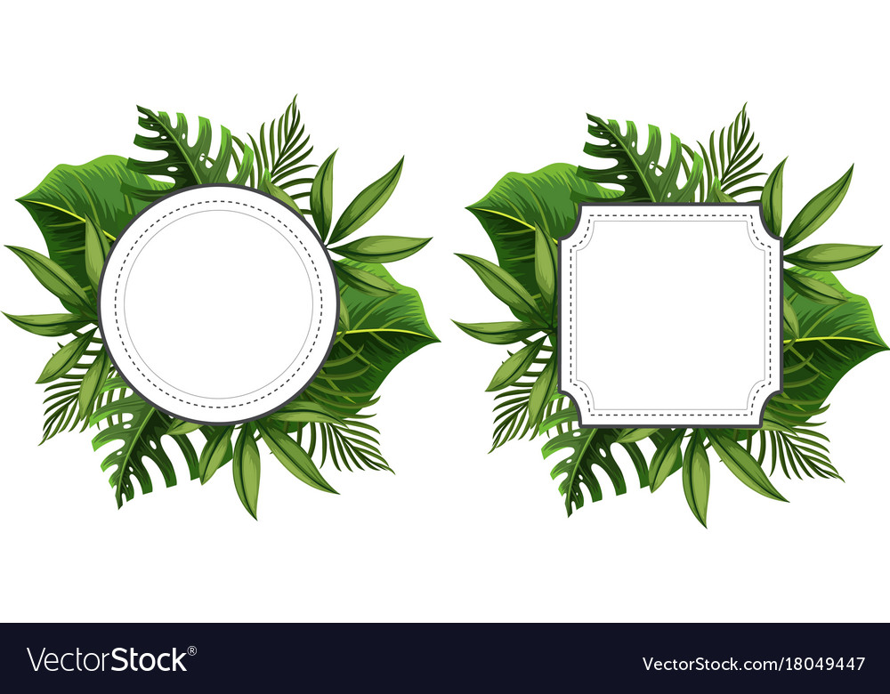 Two frame template with green leaves Royalty Free Vector