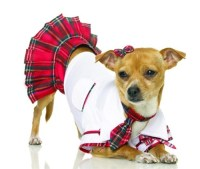 School Girl Dog Costume