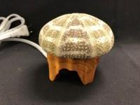 Sea Urchin Lamp W/ Bulb And Cord