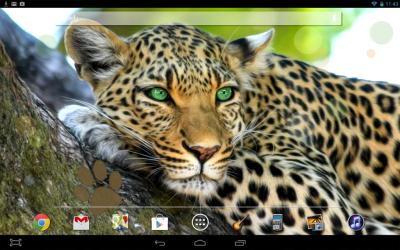 Leopard Live Wallpaper | Download APK for Android - Aptoide