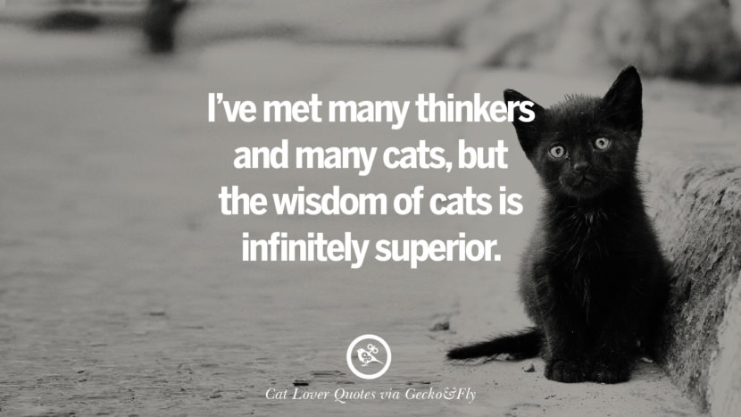 Cute Lovers Wallpapers With Quotes 25 Cute Cat Images With Quotes For Crazy Cat Ladies
