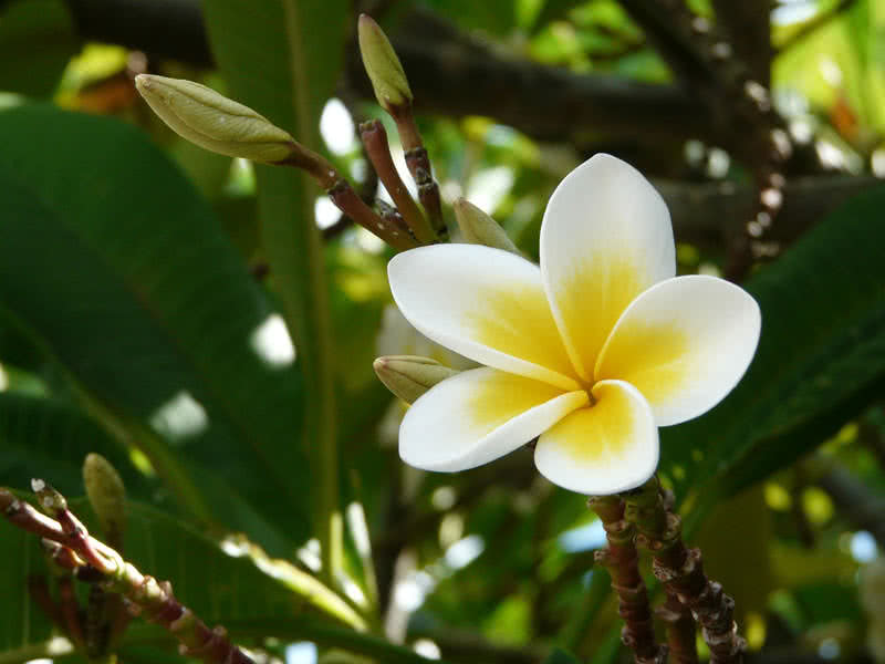 Top 10 Most Pleasant Smelling Flowers - The Mysterious World