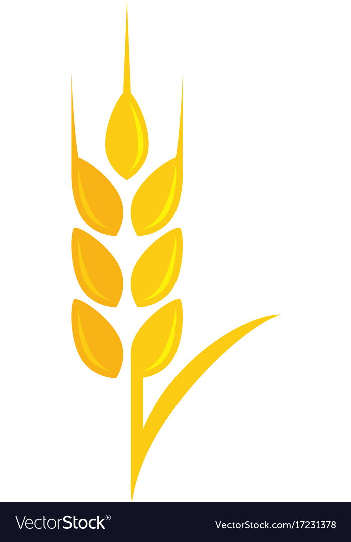 Agriculture wheat logo template icon design Vector Image - wheat template