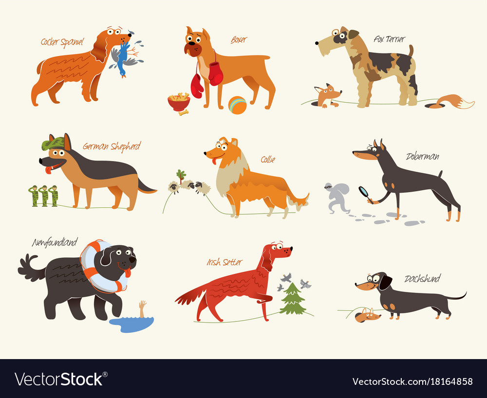 Supple Dog Breeds Working Dogs Vector Image Dog Breeds Working Dogs Royalty Free Vector Image Working Dog Breeds India Working Dog Breeds Uk bark post Working Dog Breeds