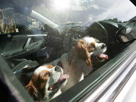 break-car-windows-rescue-dogs-heat-florida-law-3
