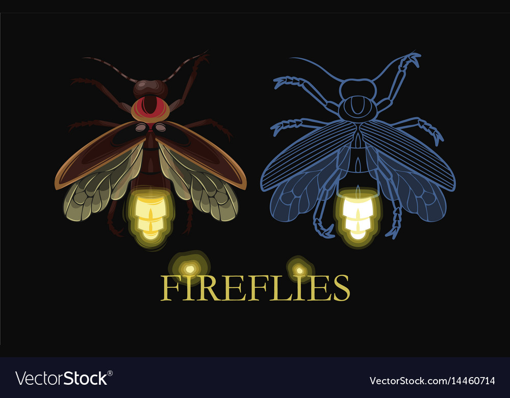 Falling Leaves Live Wallpaper Apk Firefly Insect Wallpaper Hd Enam Wallpaper