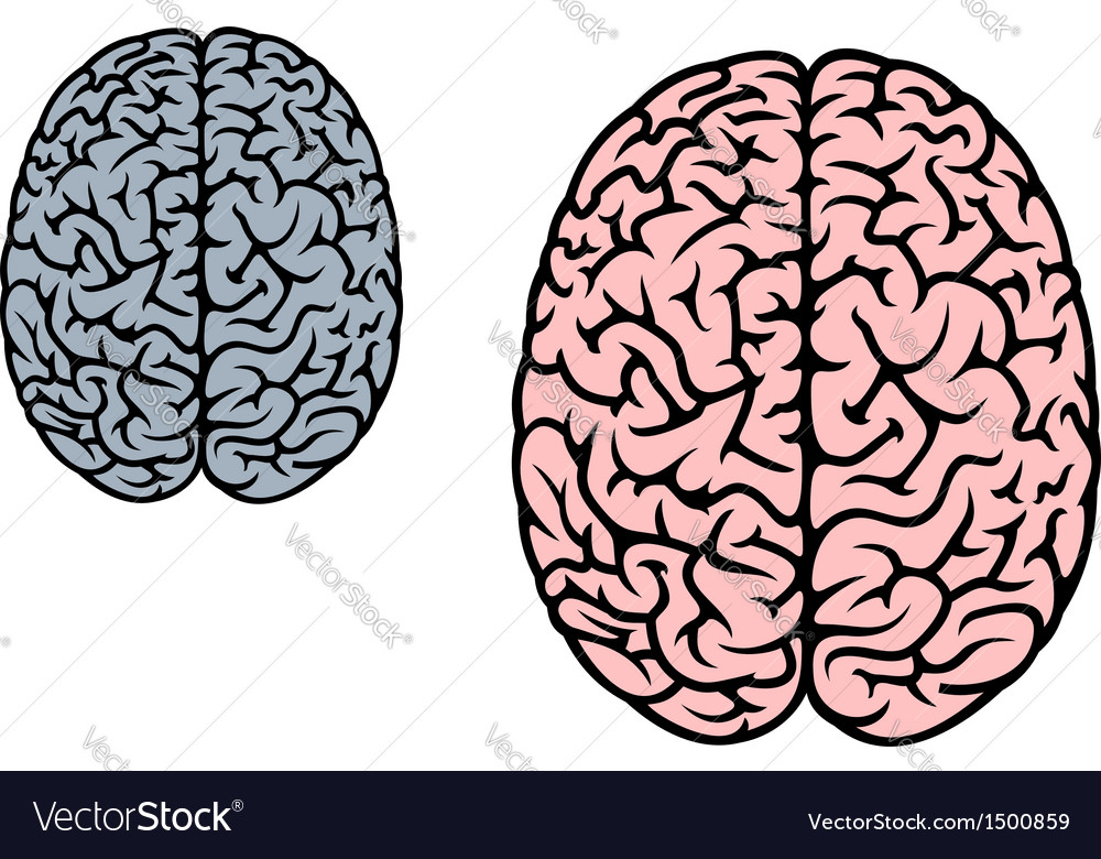 Isolated human brain Royalty Free Vector Image