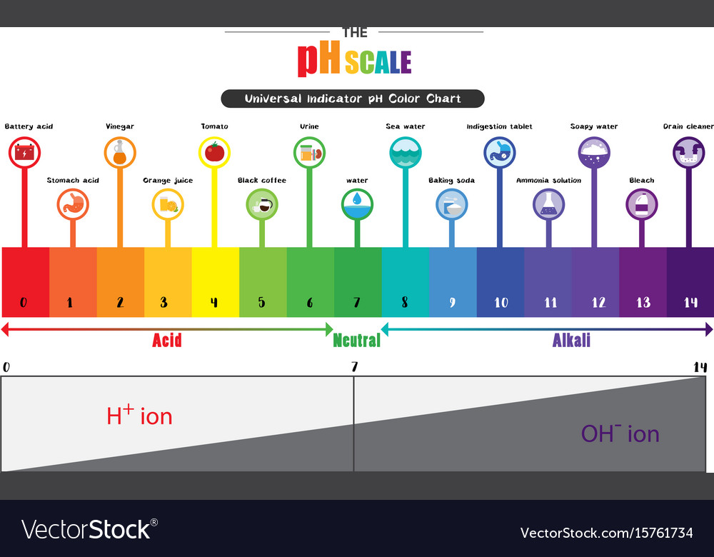 Ph scale universal indicator ph color chart Vector Image - ph chart