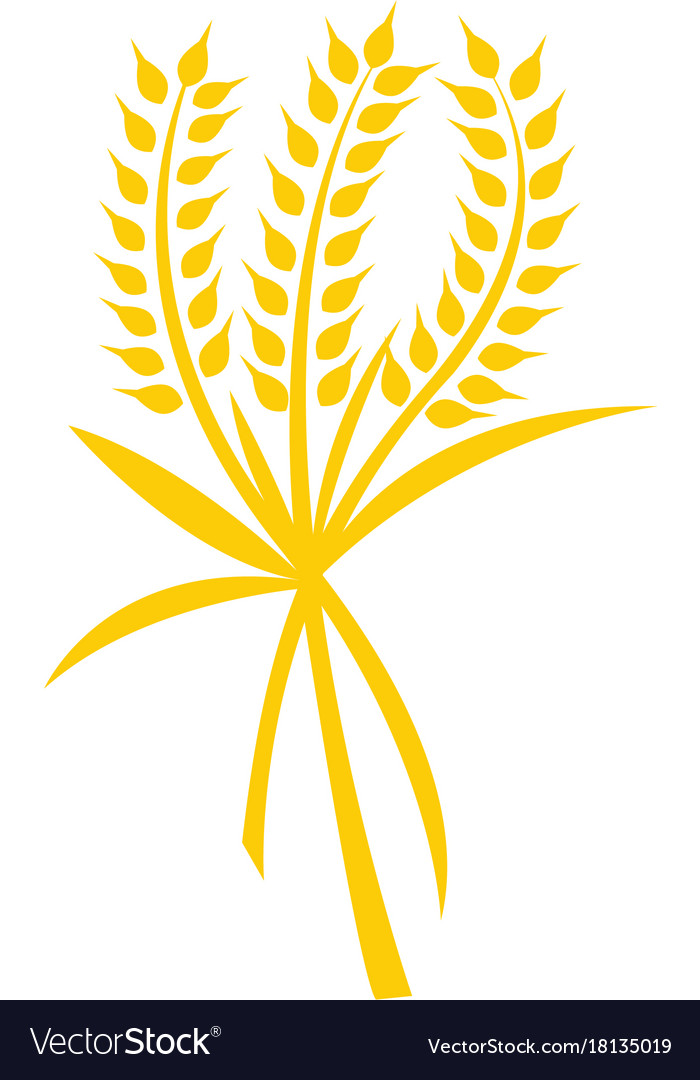 Wheat logo template Royalty Free Vector Image - VectorStock - wheat template