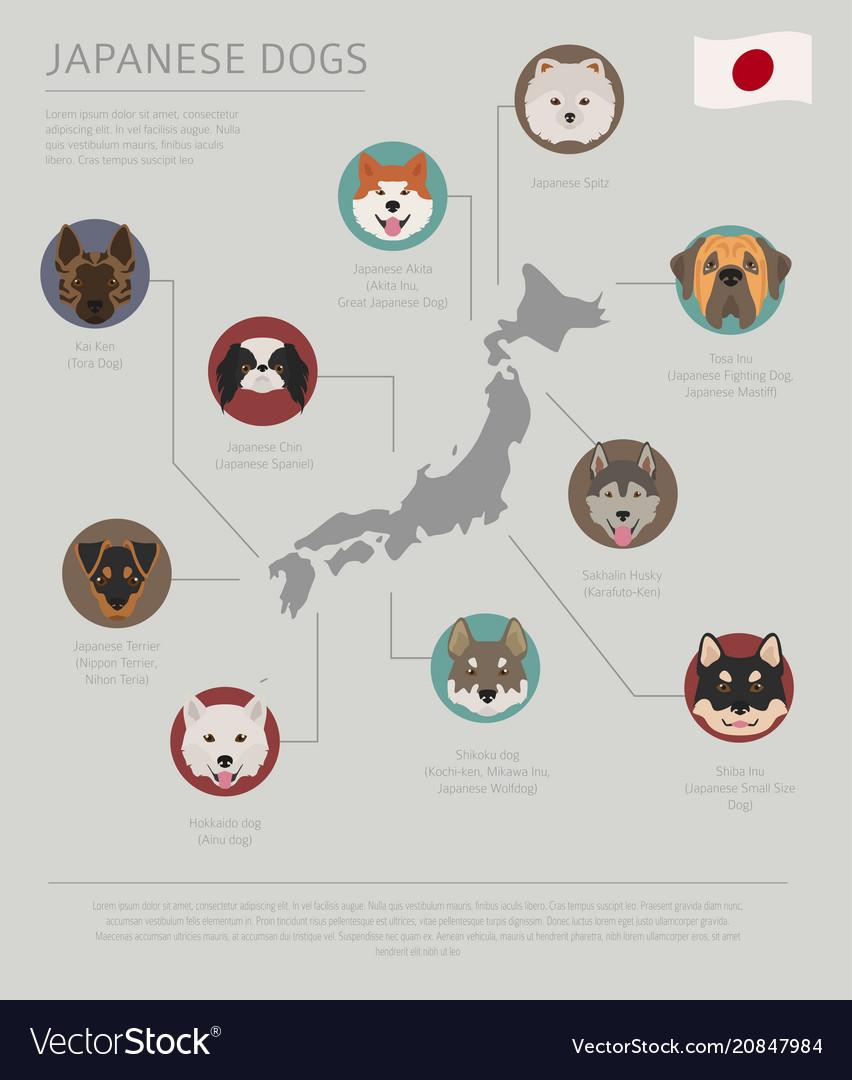 Calm Sale Origin Japanese Dog Breeds Vector 20847984 Japanese Dog Breeds Kishu Inu Japanese Dog Breeds Dogs By Country bark post Japanese Dog Breeds