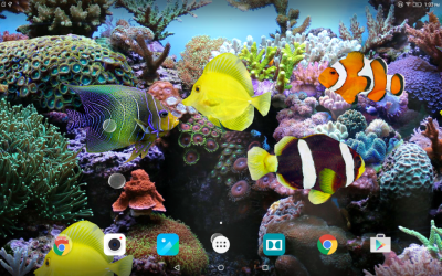 Coral Fish 3D Live Wallpaper | Download APK for Android - Aptoide