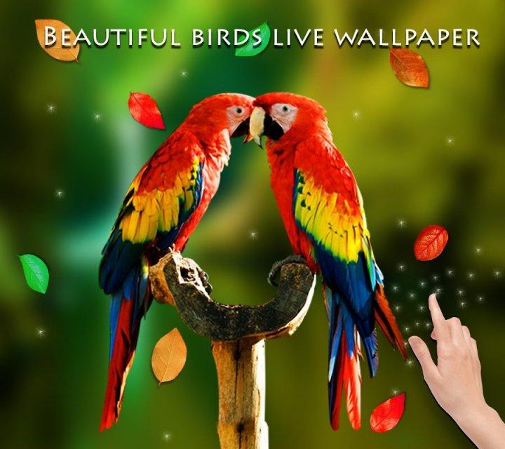 Falling Leaves Live Wallpaper Apk Birds 3d Live Wallpaper Download Apk For Android Aptoide