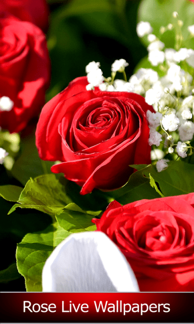 Rose Live Wallpapers | Download APK for Android - Aptoide