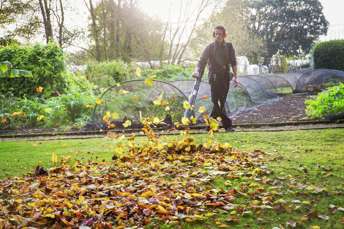 Gardene A Gardener Using A Leaf Blower To Clear Up Autumn Leaves In A Garden Stock Photo