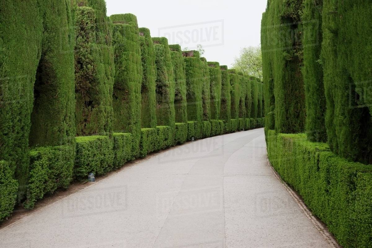 Trees And Shrubs Walkway Lined With Trees And Shrubs At Alhambra Granada Andalusia Spain Stock Photo