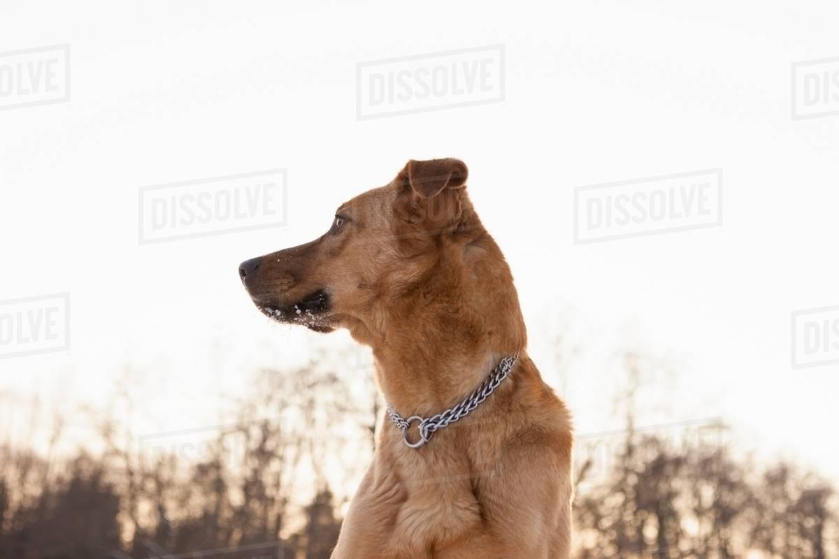 Fullsize Of Dog Standing Up