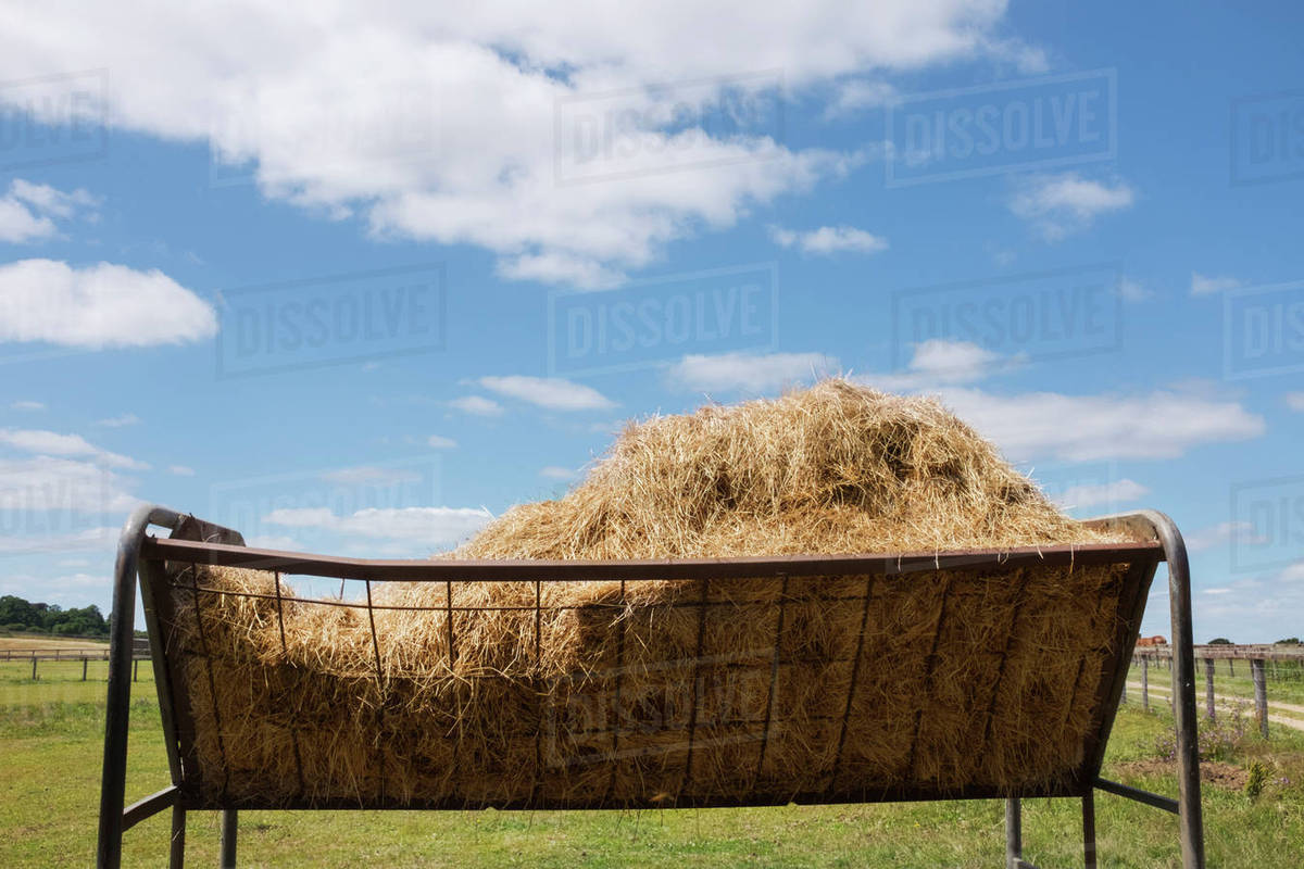 Feed Hay A Metal Animal Feed Trough Or Cattle Feeder Full Of Hay On A Pasture Under Cloudy Sky Stock Photo