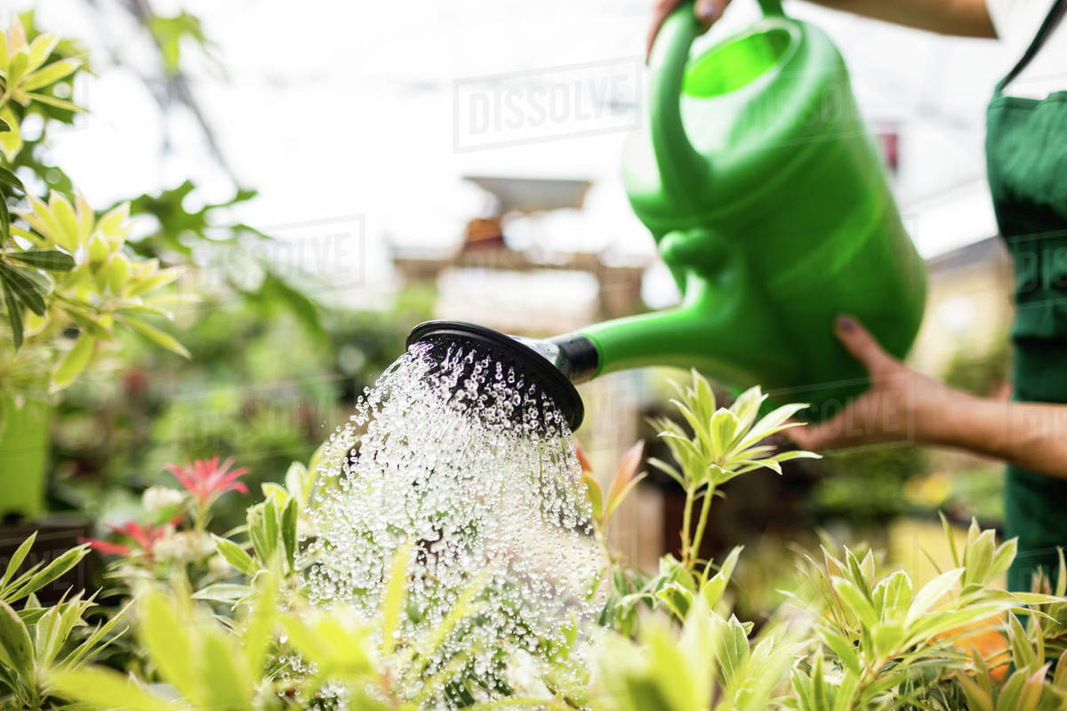Plant Watering Cans Female Florist Watering Plants With Watering Can In Garden