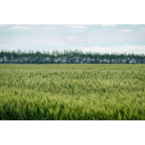 Medium Crop Of Fields Of The Woods