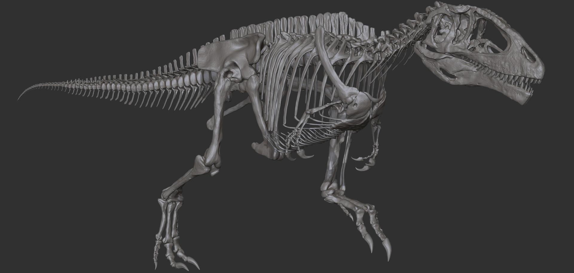 resume skeleton