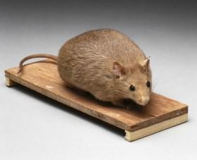 Ratón obeso