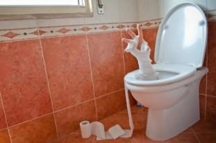 WC-Momia