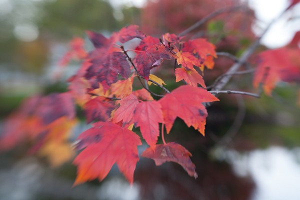 Tutorial: Editing Fall Foliage Photos (3/6)